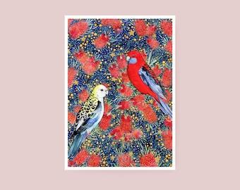Print - Bottle Brush Party - A4 Watercolour Print Rosella Bird - Giclée Art Print on Hahnemuhle Photo Rag