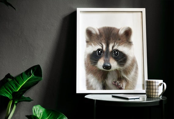 Baby racoon wall art, nursery animal print, Raccoon print, PRINTABLE decor,  Forest animal, Raccoon art print, Woodland baby shower, Kids art