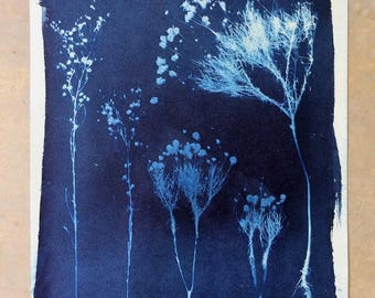 Bitterweed//Wildflower Cyanotype, 14x16""