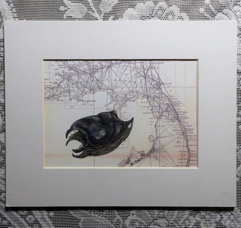 beach finds beach decor skate egg case antique Outer Banks map Mermaid/'s Purse original drawing