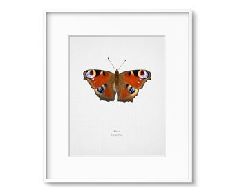 Gallery Wall Art, Science Art, Butterfly Wall Art, Butterfly Decor, Gallery, Poster, Prints, Wall Art, Wall Decor, Butterfly, Wall Prints