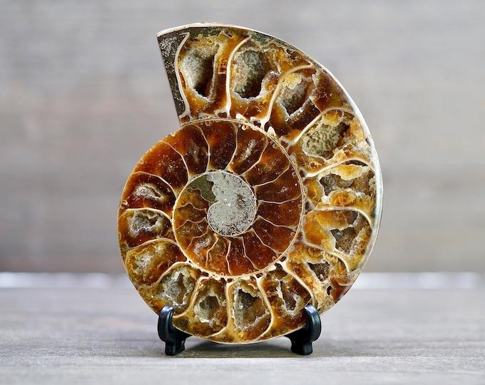 "3.3"" Ammonite Fossil w/ Stand"