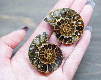 Split Ammonite Fossil Pair