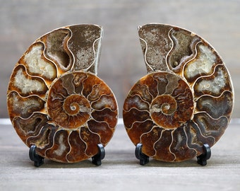 Split Ammonite Fossil Pair w/ Stands