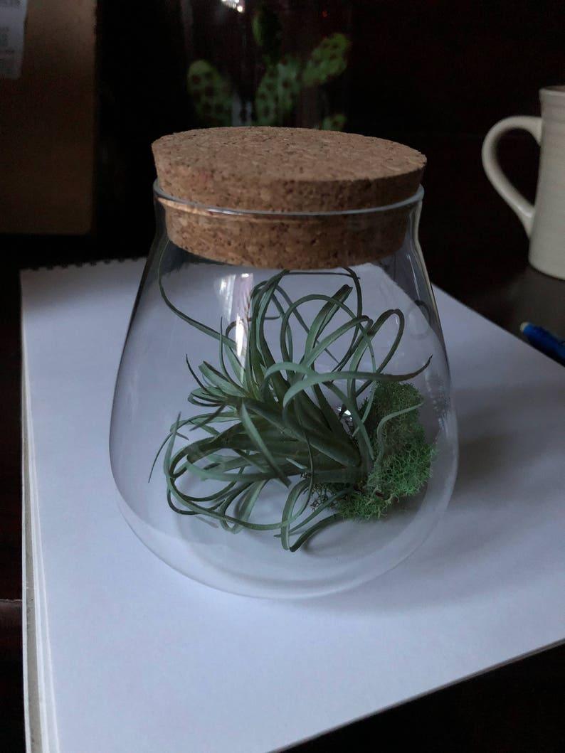 Small air plant jars