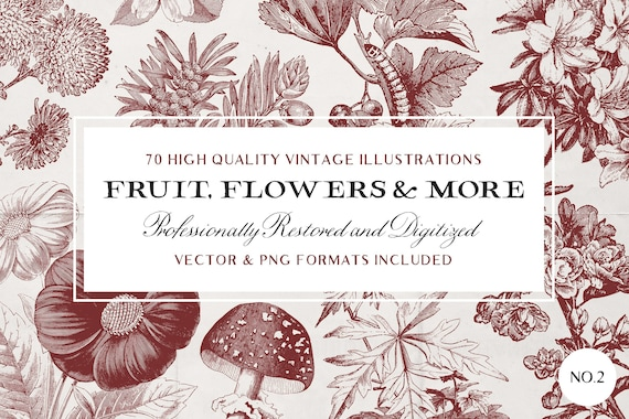 70 Fruit /& Flower Illustrations No.3 Vector and Isolated PNG Images Included! - Perfect for Scrapbooking Crafts...