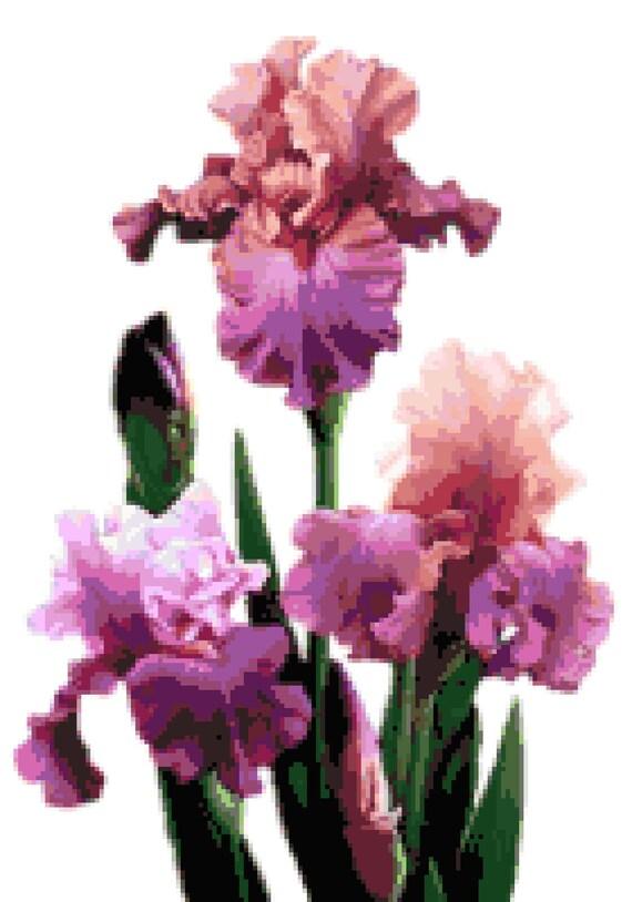 Bearded Iris Counted Cross Stitch Pattern Flowers Pixel Art Pattern Bearded Iris Perler Hama Fuse Bead Pattern Bead Weaving Pattern
