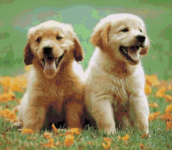 Baby Puppies Cross Stitch Pattern Golden Retriever Puppy Etsy