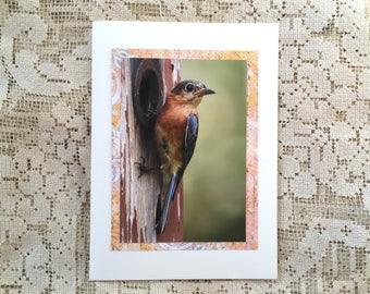 Bluebird note card, 2