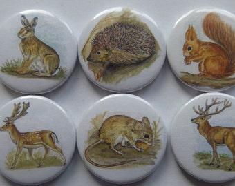 Magnet forest animals