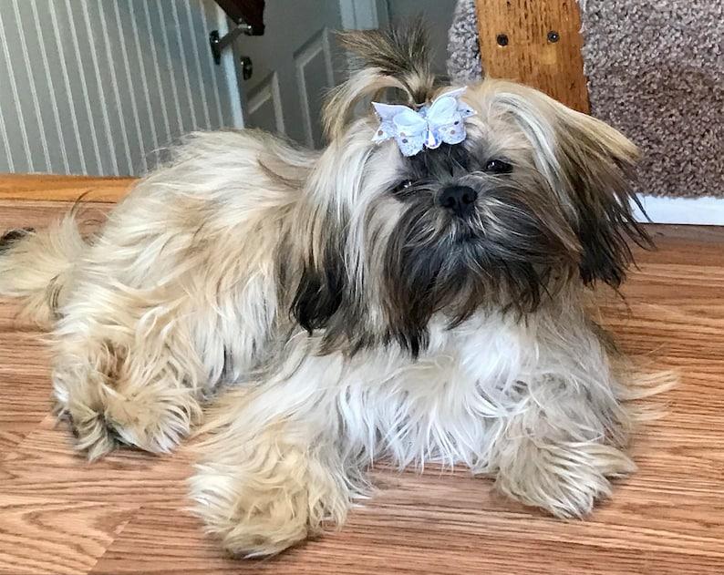 Dog Hair Bows Camouflage Real Tree Mossy Oak Dog Bow Camo Dog Bow Army Dog Bow