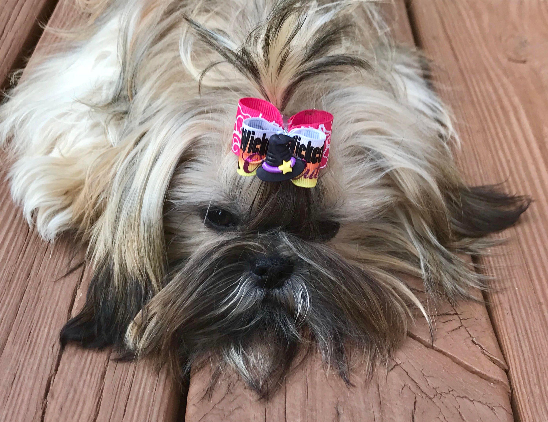 Dog Hair Bows Florida State FSU Seminoles Pet Bow Dog Bow Double Elastic Bands University Football