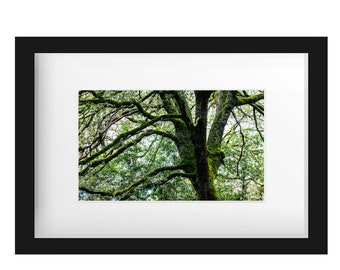 Old Tree | Green | Fine Art Photography | polychromatophil | moss | enchanted | mystic | mysterious | Sequoia | calming | Photo