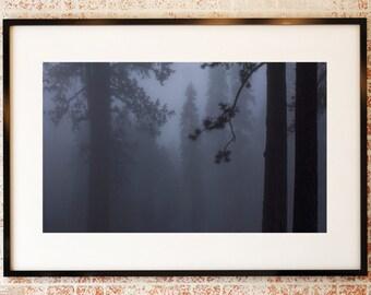 Sequoia | Grey Tree | Fine Art Photography | Photo | Fog | Mist | Mystic | Shadow | Silhouette | polychromatophil | Art | Mysterious