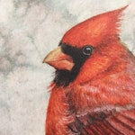 50% OFF SALE Watercolor Northern Cardinal 5x7 postcard print