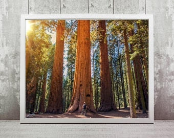 Giant Sequoia Forest Print, Instant Download, Travel Photography, Home Decor, Wall Art, Travel Prints, California, Travel Photography
