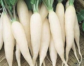 Rettich Gemüse Französisch Frühstück 3-1500 Samen