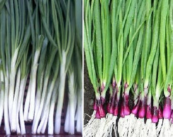 Spring onion WHITE (400 seeds) or PURPLE (100 seeds)