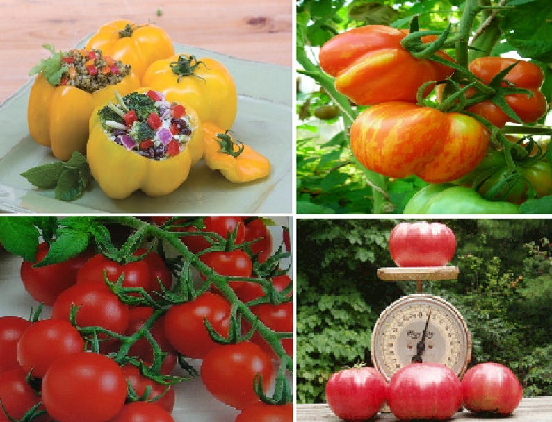 Klettergerüst Tomate : Tomaten 4 verschiedene etsy