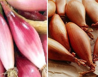 Shallot-Purple (250 SEEDS) or brown (200 SEEDS)