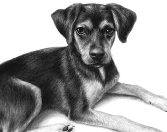Custom Dog Portrait, Dog Drawing, Custom Pet Portrait, Charcoal Drawing, Personalized Animal Portrait, Dog Lover Gift, Animal Portrait