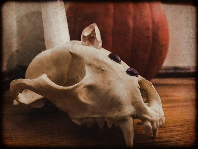 Altar Skull Crystal Candle Holder Animism Dedication