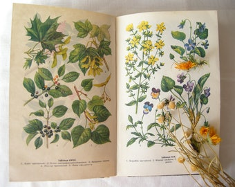 Forest Vintage 1987s book illustrated book Forest soviet book with Botanical illustrations Forest Woodland book Gift of Forest 56 Drawings