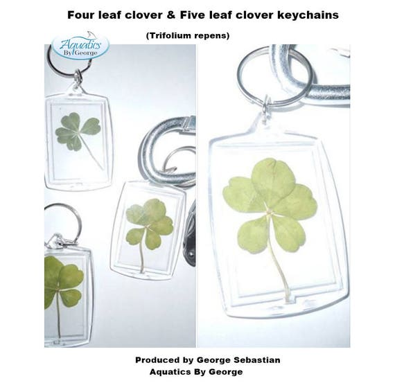 Real Four Leaf Five Clover Keychain Charms