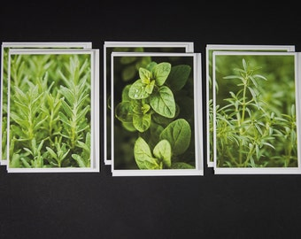 Herbs - Boxed Photo Greeting Cards