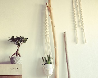 Small hanging plant