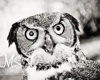 Rescue Owl Black and White