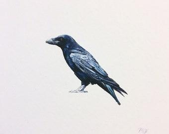 Raven, miniature watercolor painting
