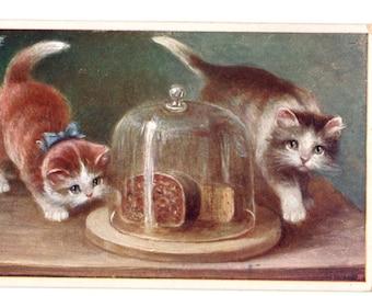 Edwardian postcard cat kitten art pet portrait M Stocks artist signed Antique cats kittens art postcard ginger /& tabby cats