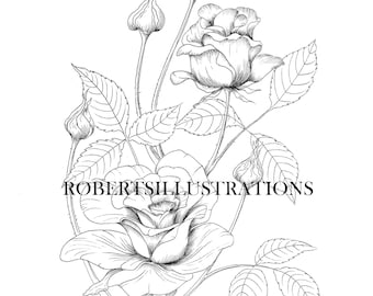 Birth Flower June Rose Colouring Page