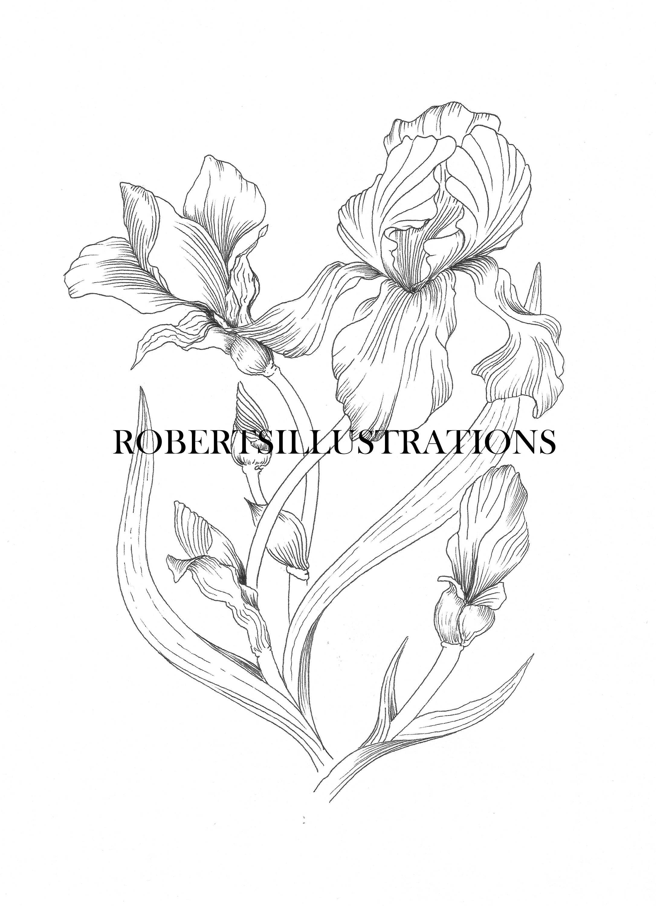 Birth Flower February Iris Colouring Page Etsy