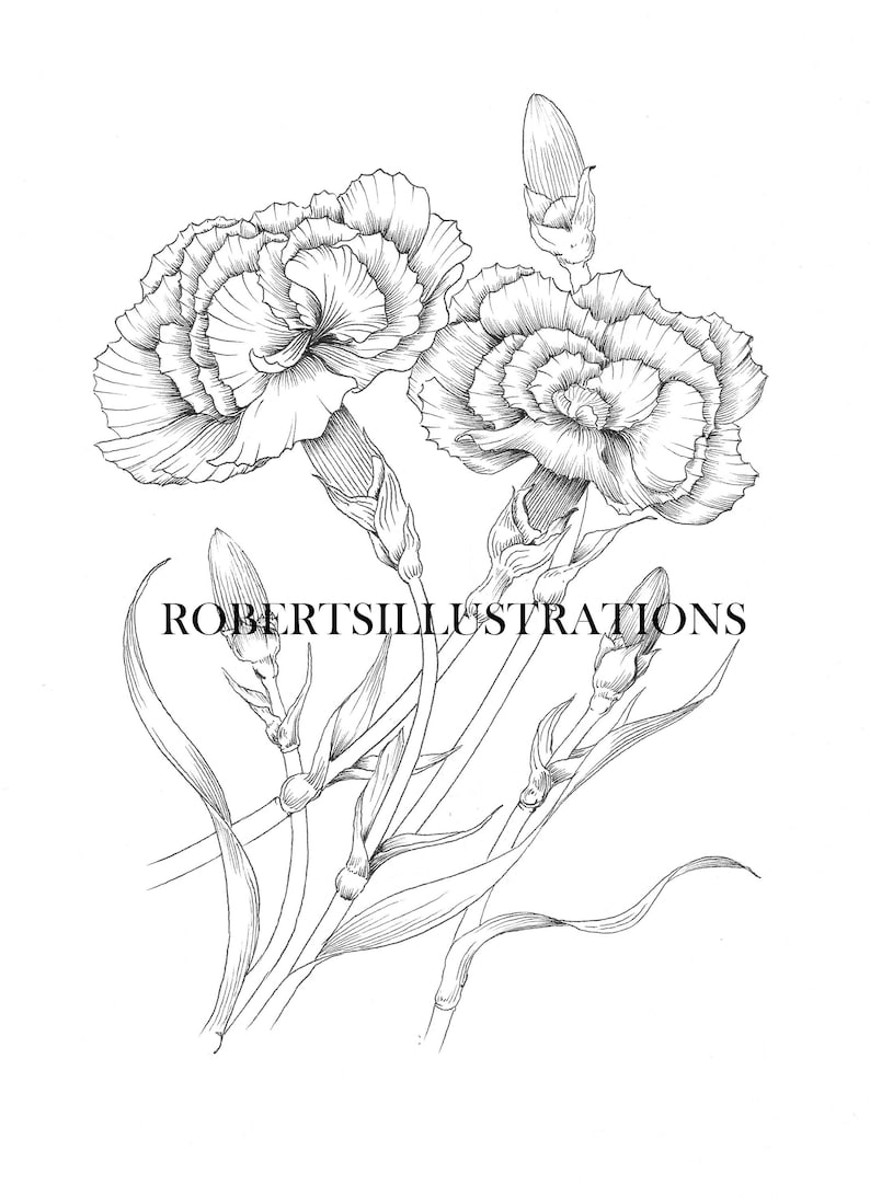 Birth Flower January Carnation Colouring Page Printable Etsy