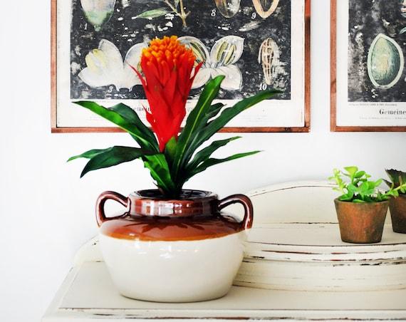 House plant, Artificial Bromeliad Arrangement, Tropical Flower Arrangement, Boho flower arrangement, Faux Plant Arrangement,