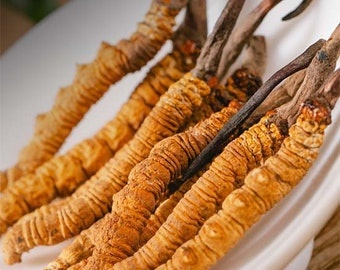 Bhutan Wild Cordyceps Sinensis Grade C by Bhutan Natural