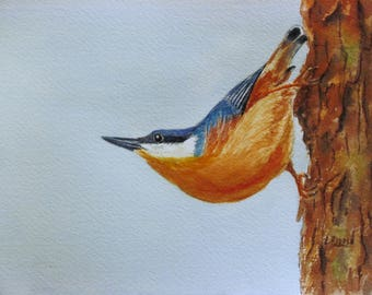 Nuthatch watercolor painting original bird painting 6x8