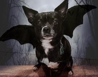 Bat Wings Handmade Dog Bat Costume, Halloween Dog Costume for Dogs Small, Costume for Medium Dogs, Batdog, Wings for Dog Wings Pet Cat Wings