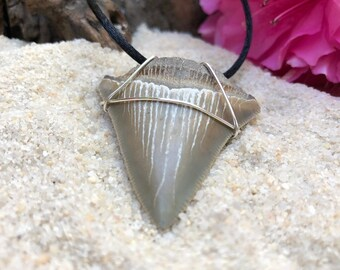 Megalodon Tooth Necklace / Megalodon Shark Teeth Jewelry / Fossil Shark Tooth Pendant / Shark Tooth Necklace / Shark Teeth Jewelry