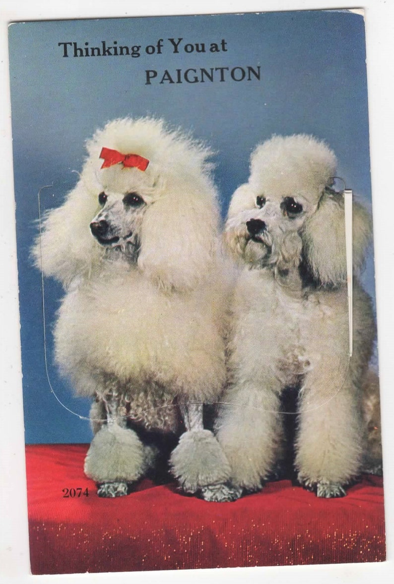 Novelty Fold Out of Paignton Valentines Two POODLES Thinking of you at PAIGNTON Vintage Postcard c1950 Devon