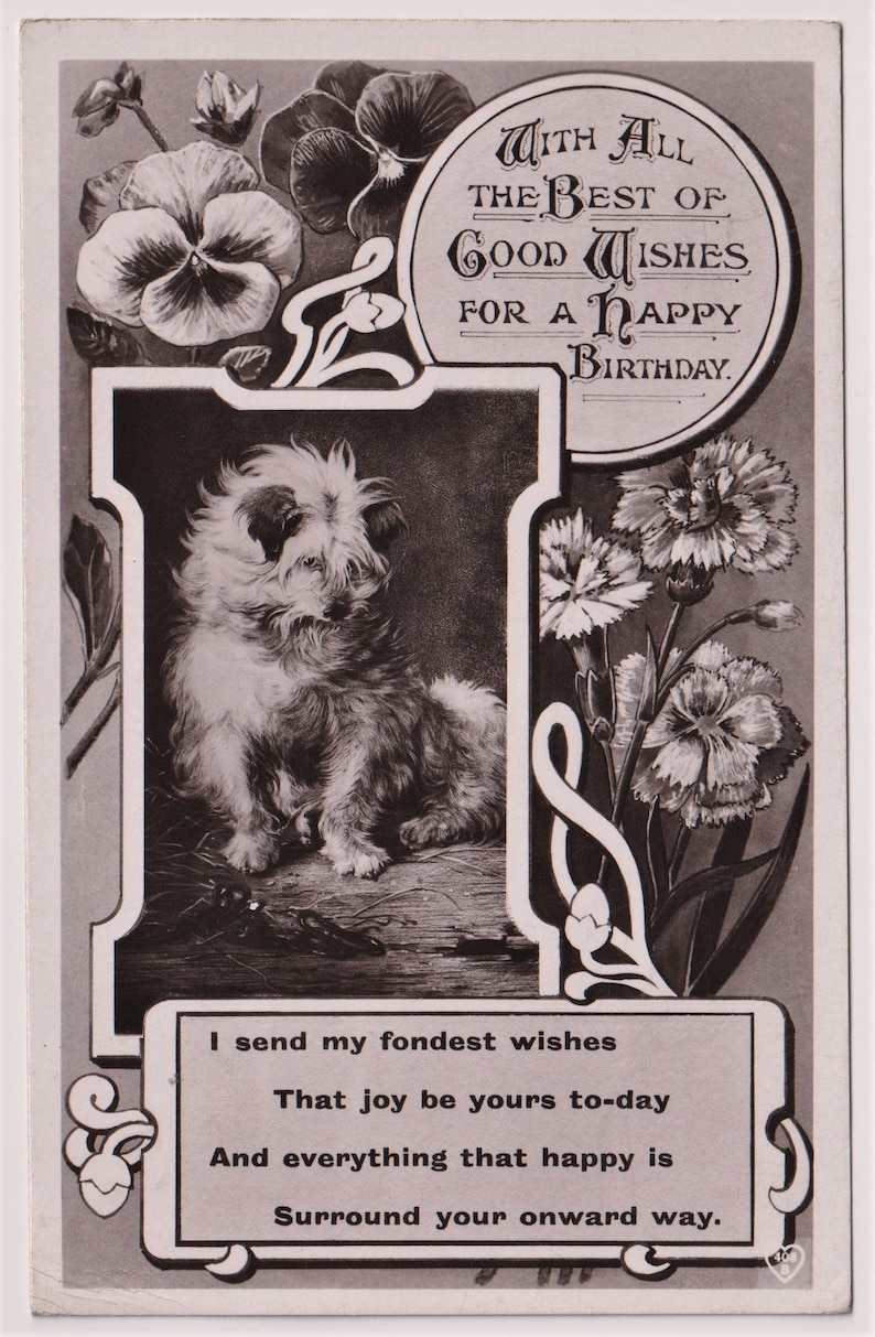 Funny TERRIER FLOWERS Birthday Posted in 1912 Vintage Real Photo Postcard Hart Publishing