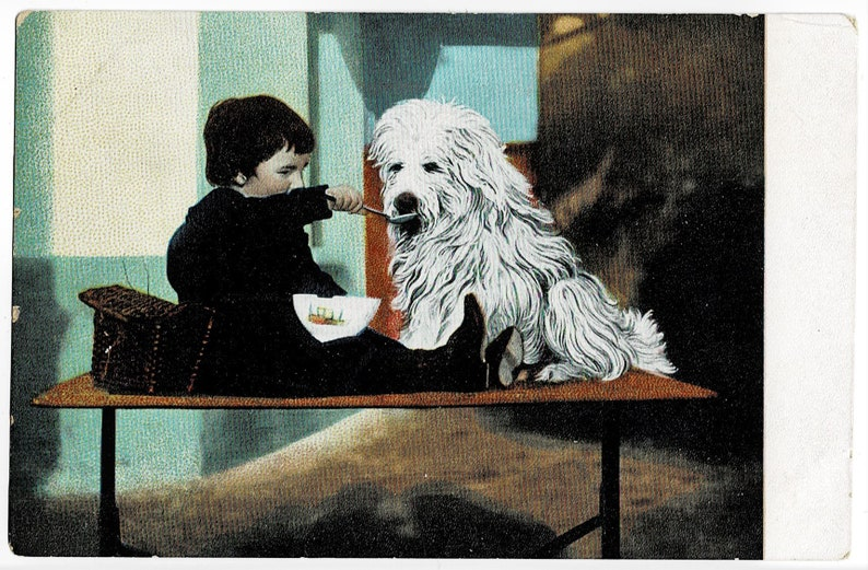 Feeding him Porridge?! Vintage Postcard c1908 Big HAIRY DOG and CHILD