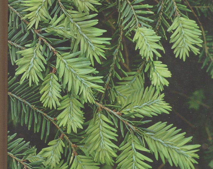 TIME-LIFE: The Encyclopedia of Gardening; Evergreens  by James Underwood Crockett (1971)