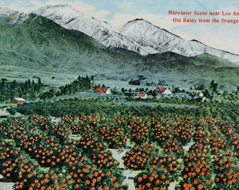 FREE SHIPPING: Vintage Souvenir Postcard - Midwinter Scene near Los Angeles, California - 1940s Unmailed Colorful Post Card