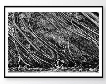 Black and white photography, Tree Photography, Nature Photography, Nature Print,Abstract photography,Travel photography,Fine Art Photography