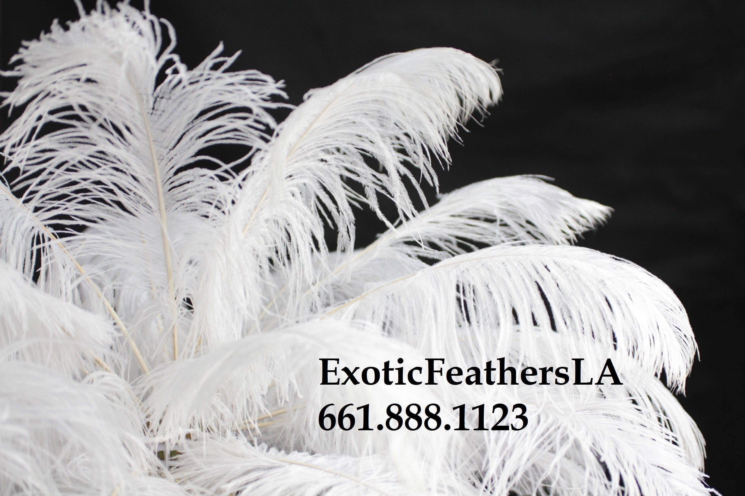 WHITE Ostrich Feathers. 15 to 18 inch Tail feather Plumes 1-100 pcs ...