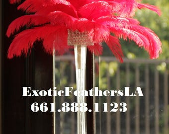 USA Shop! RED Ostrich Feathers 13 to 18 inches long. Ostrich Tail Centerpiece Feathers