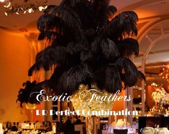 Black Ostrich Feathers 15 to 18 Inches Long. USA Seller! Ostrich Feather Plumes, Mardi Gras, Samba Costumes, Carnival, Feather Centerpiece